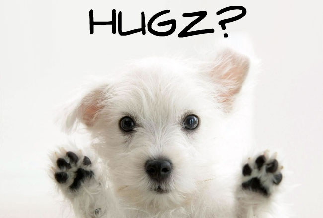 Cute Puppy hugs
