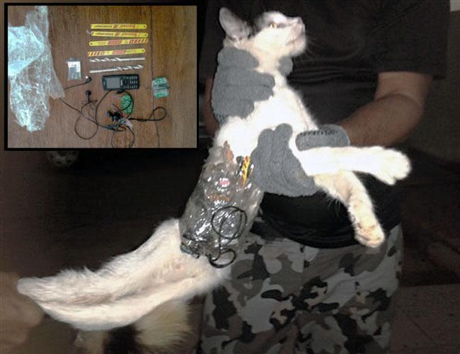 Real-Life Cat Burglar