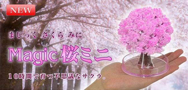 Chia Pet Cherry Blossom