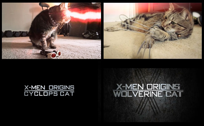 X-Men mutate into X-Animals: Wolverine cat and Cyclops cat