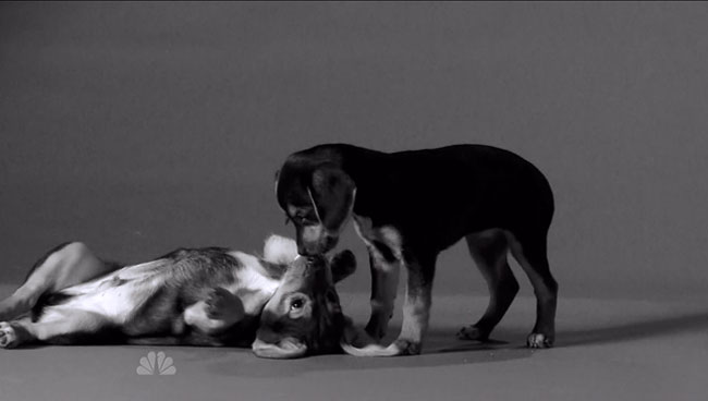 Jimmy Fallon does First Kiss parody with puppies and kittens