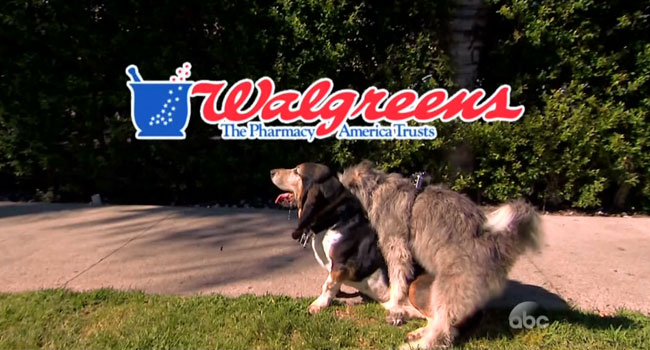 Jimmy Kimmel unveils GoPro camera for dogs humping Walgreens