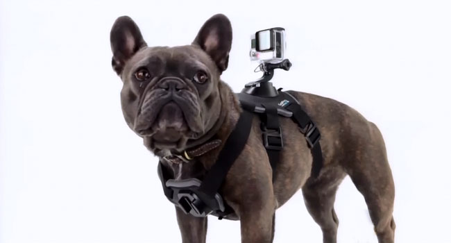 Jimmy Kimmel unveils GoPro camera for dogs