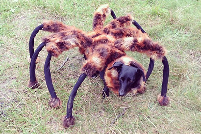 Giant spider prank goes viral on the web