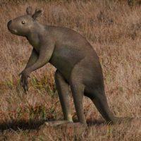 Sthenurus stirlingi strong tail giant kangaroo