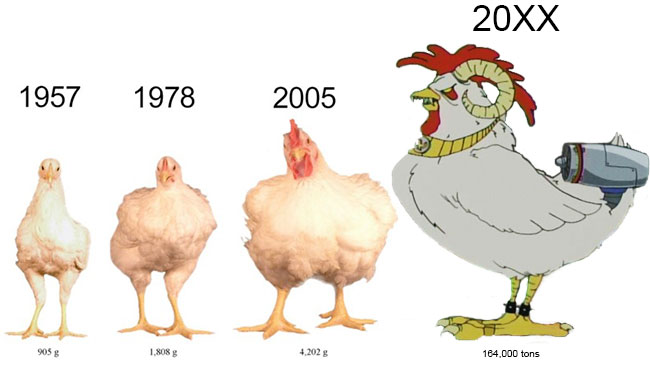 Supersized-chickens-product-of-selective